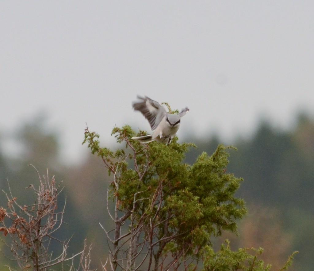 Varfågel 2