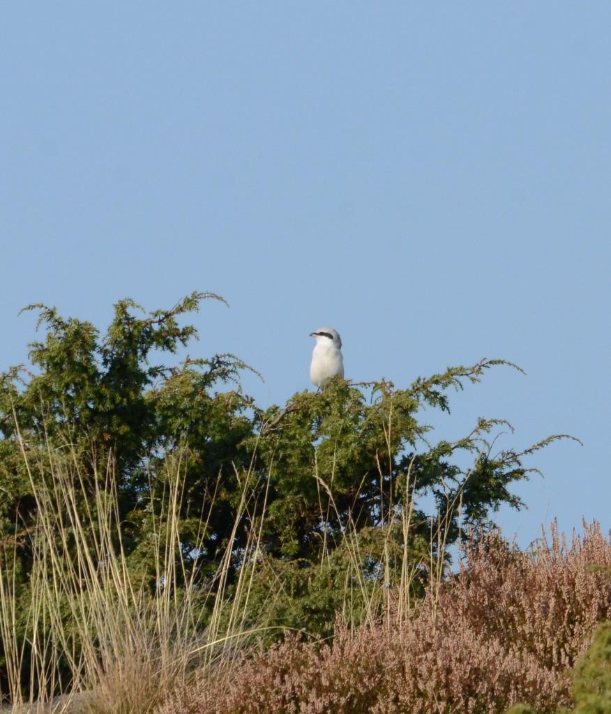 Varfågel 5