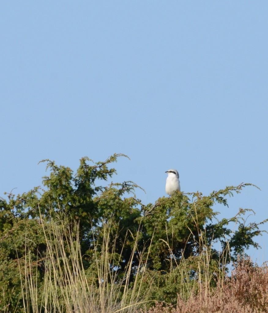 Varfågel 6